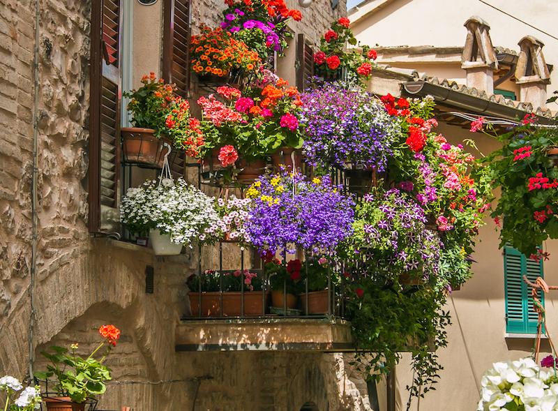 Estate in arrivo: i fiori più belli per il tuo balcone e il tuo ...