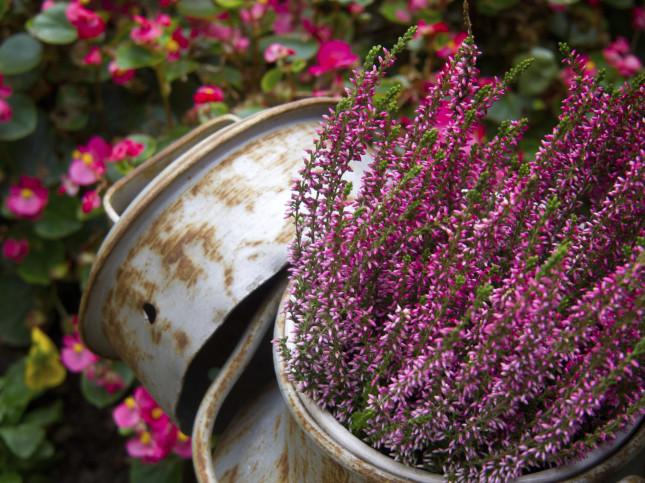 Autunno e inverno senza segreti piante da giardino per i for Piante che fioriscono in inverno