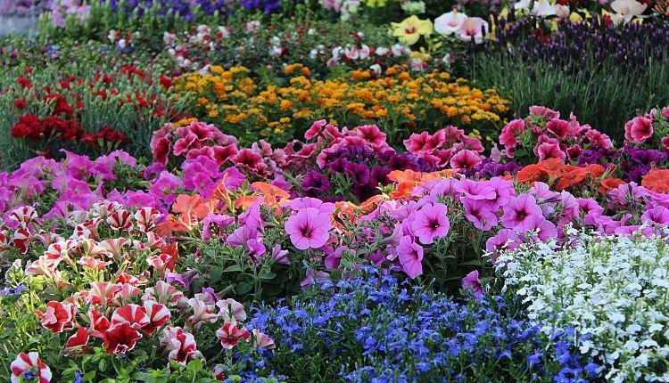 Come si chiama? I nomi più particolari dei fiori più belli