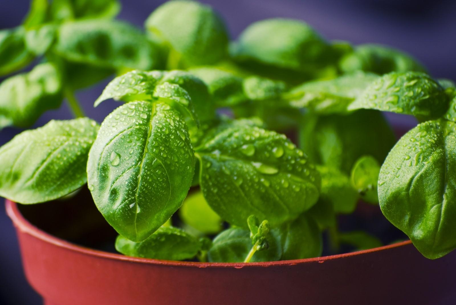 Benessere e bontà sul tuo orto da balcone. Guida rapida per le spezie