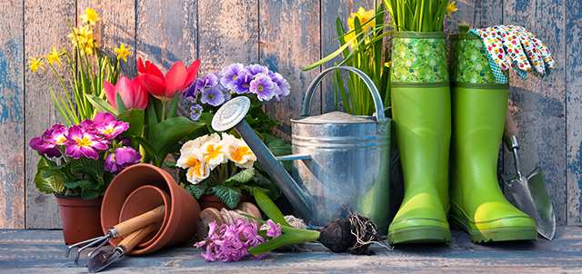 Giardinaggio per principianti: i primi passi per coltivare le tue piante in giardino e sul tuo balcone