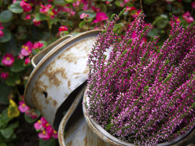 Autunno e inverno senza segreti. Piante da giardino per i mesi più freddi